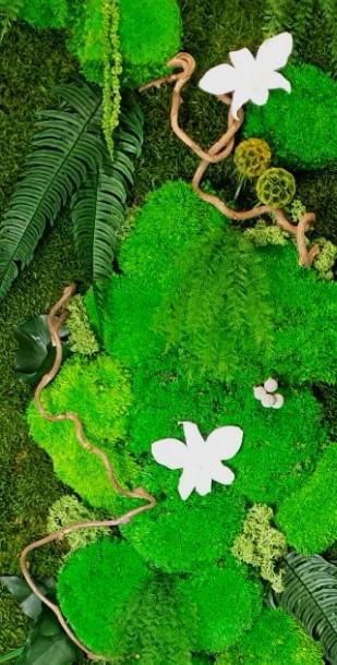 Tableau Végétal Osylis