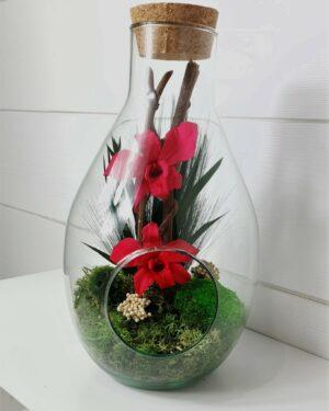 Terrarium Dendrobium 1