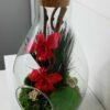 Terrarium Dendrobium fushia 2